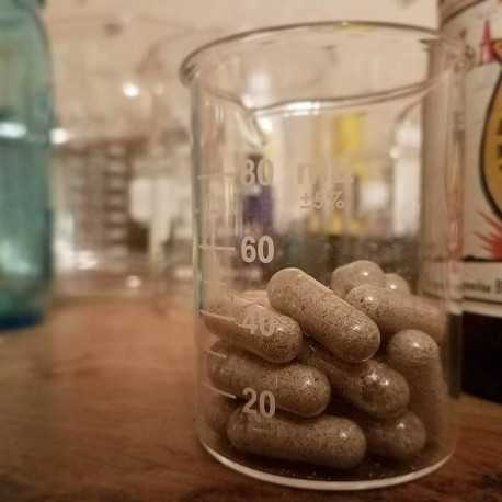 GOLDEN TEACHER MUSHROOM CAPSULES